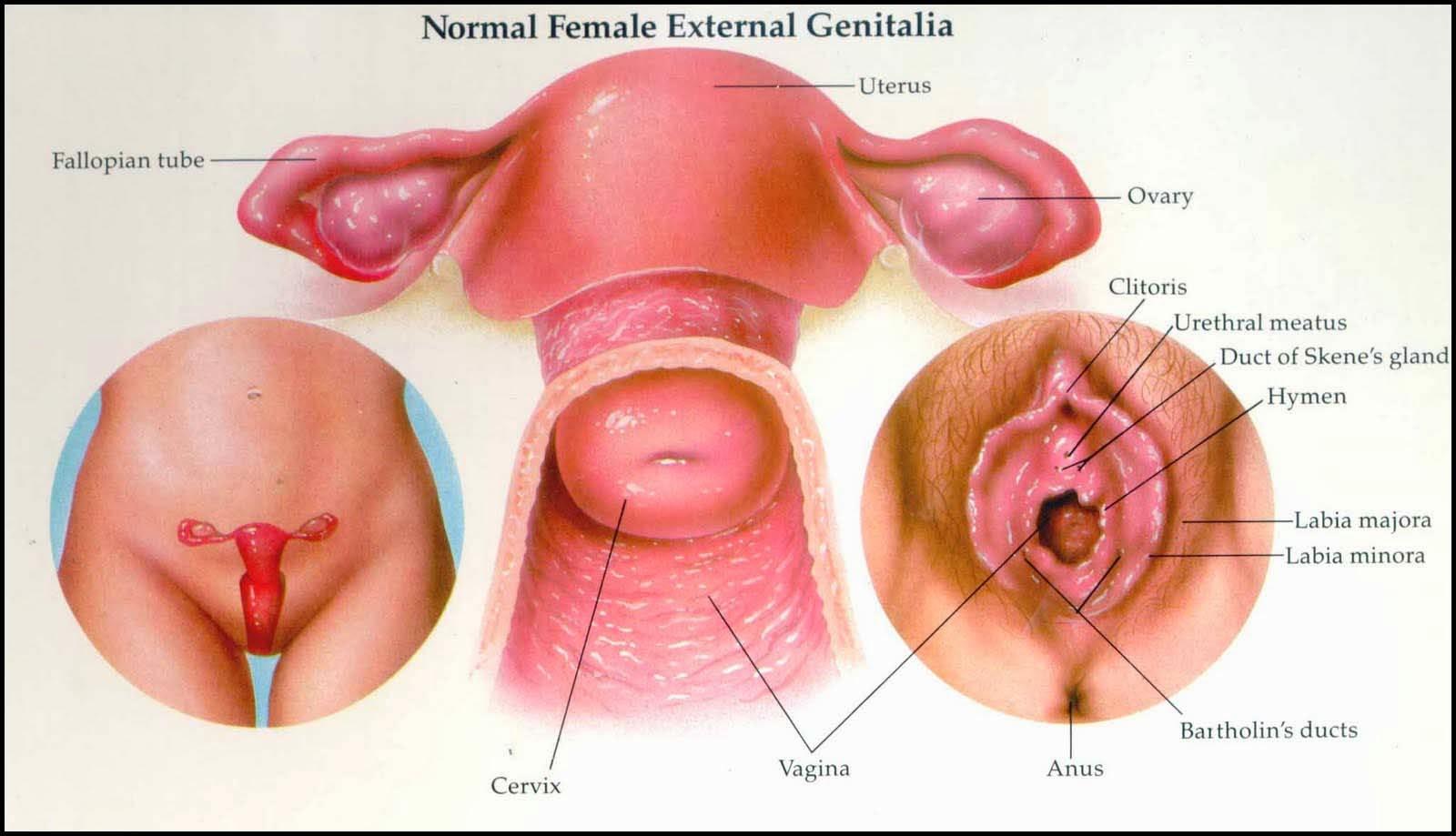Waspadalah, 20% Kanker Serviks Masih Ditemukan pada Wanita 65 ke Atas